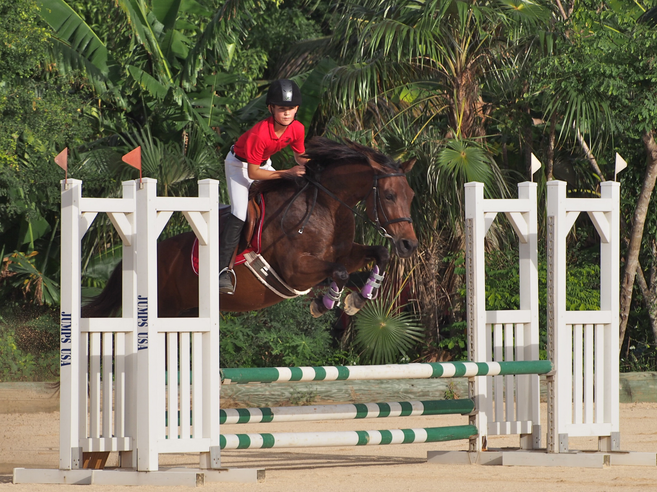 trials-for-the-cea-jsjc-in-cayman-national-jumping-show