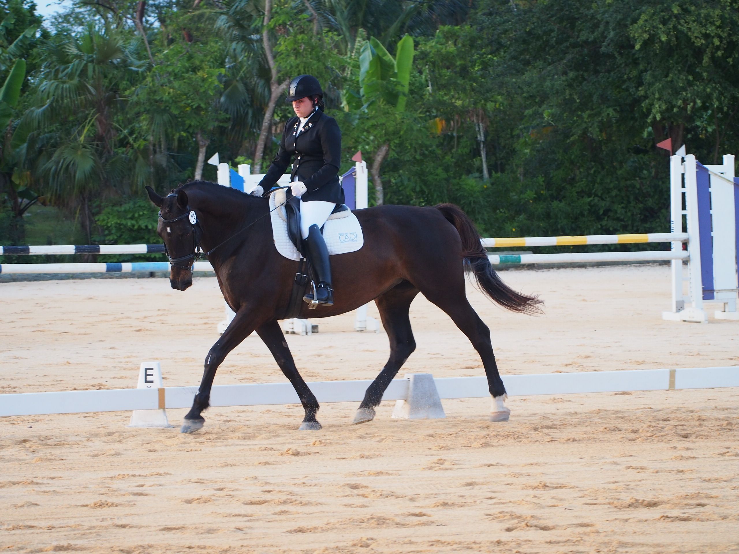 fei-world-dressage-challenge-clinics-with-c-thaxton