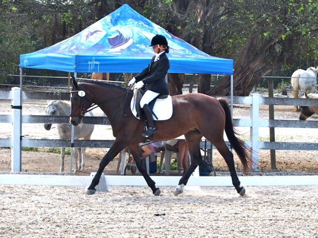 cief-national-dressage-show-sunday-october-27th